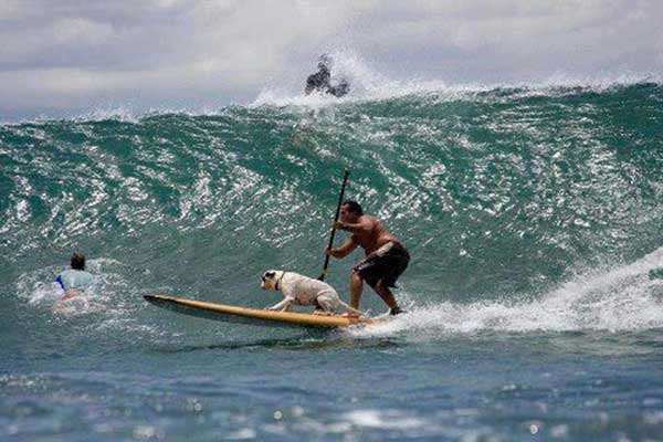 dog-catching-a-huge-wave-on-a-sup