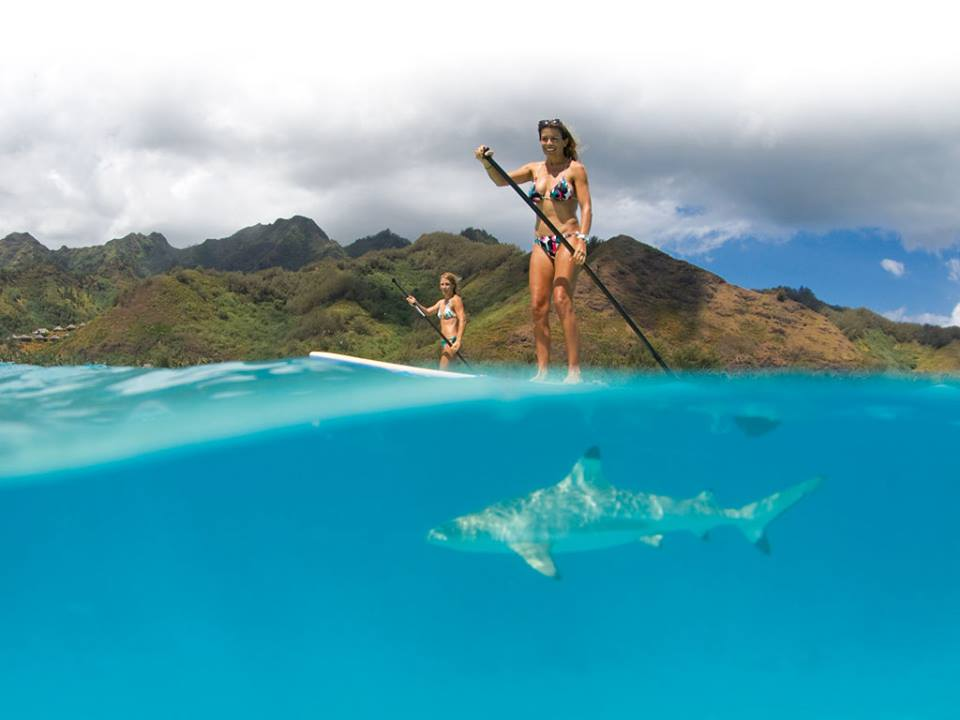 girl paddleboarding over a shark