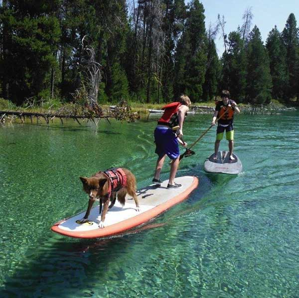 kids-and-dog-jousting-with-standup-paddles-
