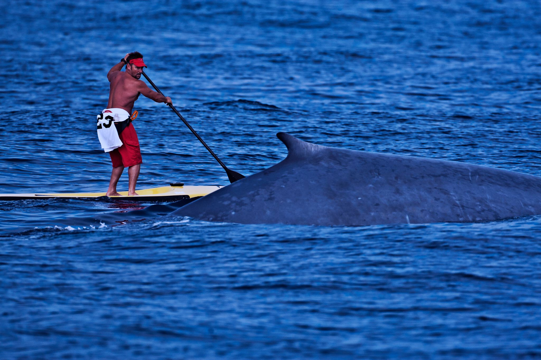 whale next to sup