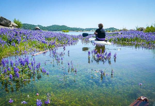 "Cheryl Wood ""Lupine Paddling Fantasy"" was taken last Spring on Folsom Lake. The lake levels usually rise in the spring with the snowmelt after the lupine has bloomed, creating islands and shorelines with blankets of lupine emerging from the water. I captured a peaceful moment of my friend Rebecca enjoying this magical spot on her board."