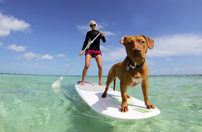 Duncan Brake Our rescue pit bull Lusca was in a pretty bad state when we found her, but is now happy and healthy and loves jumping off the board as much as being on it. We live on a tiny island in the Bahamas called Bimini and the shallow lagoons are a perfect spot for a paddle. This picture was her first time on the board with my wife!