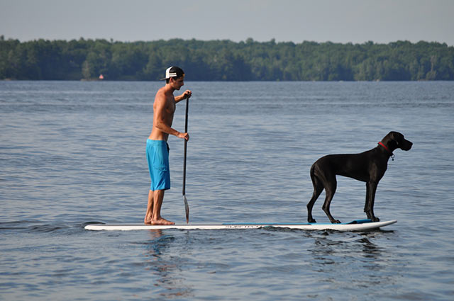 Jesse Caletti: A walk on the water with Luna the Great Dane Photo By Montana Caletti