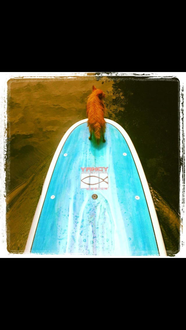 Julie Maclay: Journey is my paddleboard partner. She use to hate the water but now LOVES to paddleboard!