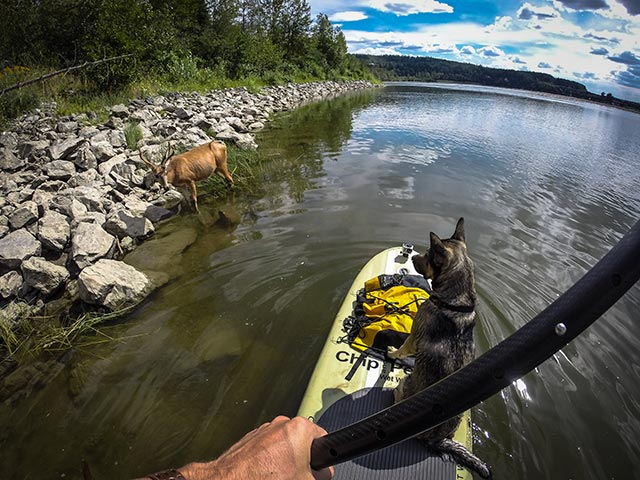 Jeremy Bekken: What SUP buck? Prince George, BC Canada