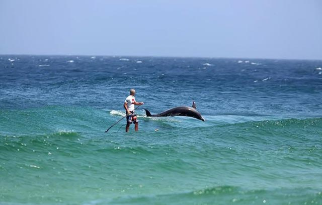 Tammy Paterson: Suping with a friend! My husband Rob Paterson at Boomerang Beach, Australia last Summer. He standup paddles with dolphins every day!