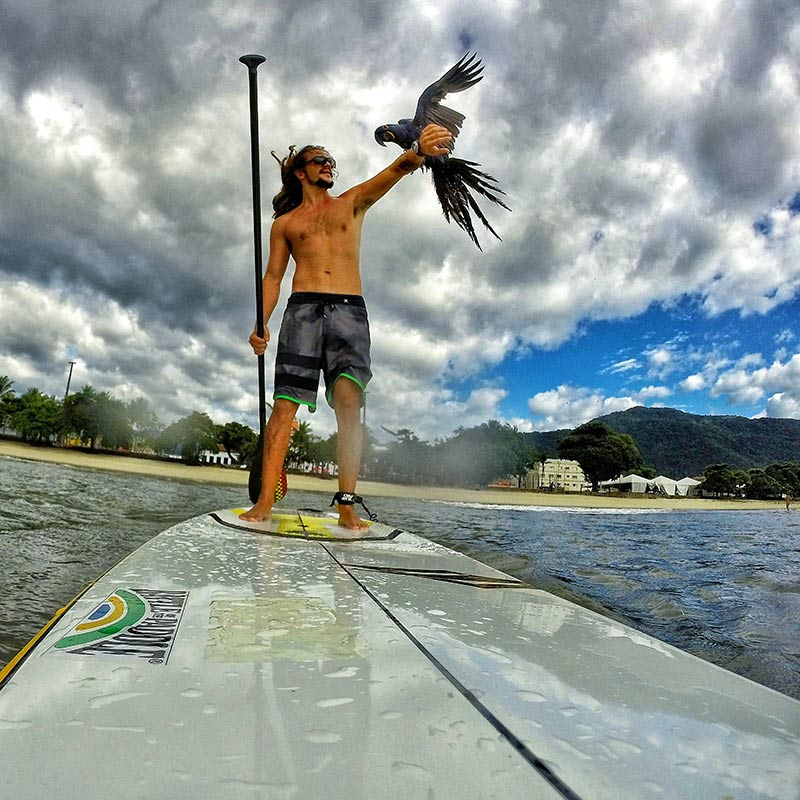 Bruno Brauer: Brazilian Bruno Brauer paddling with his hyacinth macaw friend in ubatuba. The best way to have fun is in the ocean