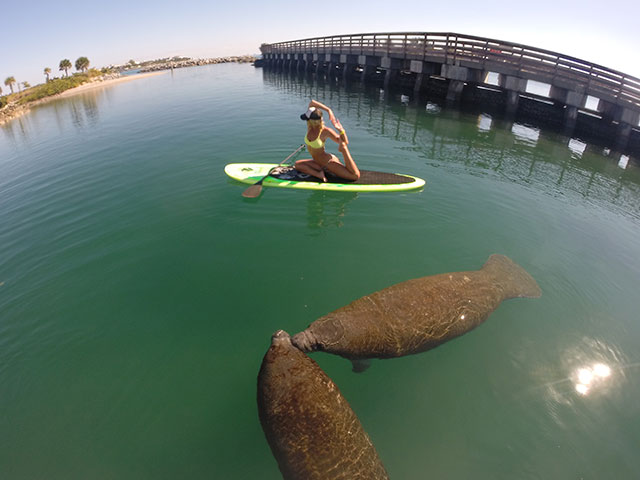 Marissa Elion: Photo bombed by some kissing manatees.