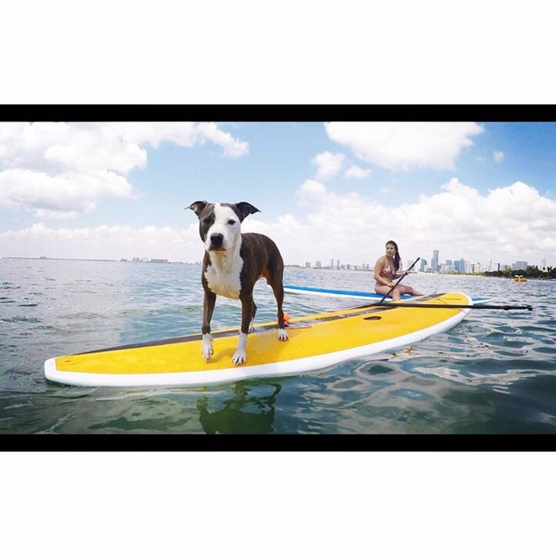Michelle Garcia: Penny the pitbull and the Miami skyline in the background