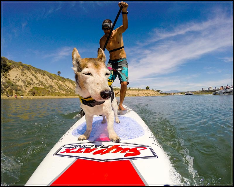 Rene Bruz: Kia the wonder dog out pushing her poppa to paddle harder for the upcoming race season (shot: Newport Beach Dover Shores Cliffs) she's done 240mi in this same spot so far this year, she's a great coach !!!