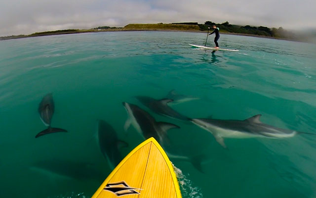 Shane Anderson: Sup session with Dusky Dolphins at Mangamunu, Kaikoura, New Zealand.