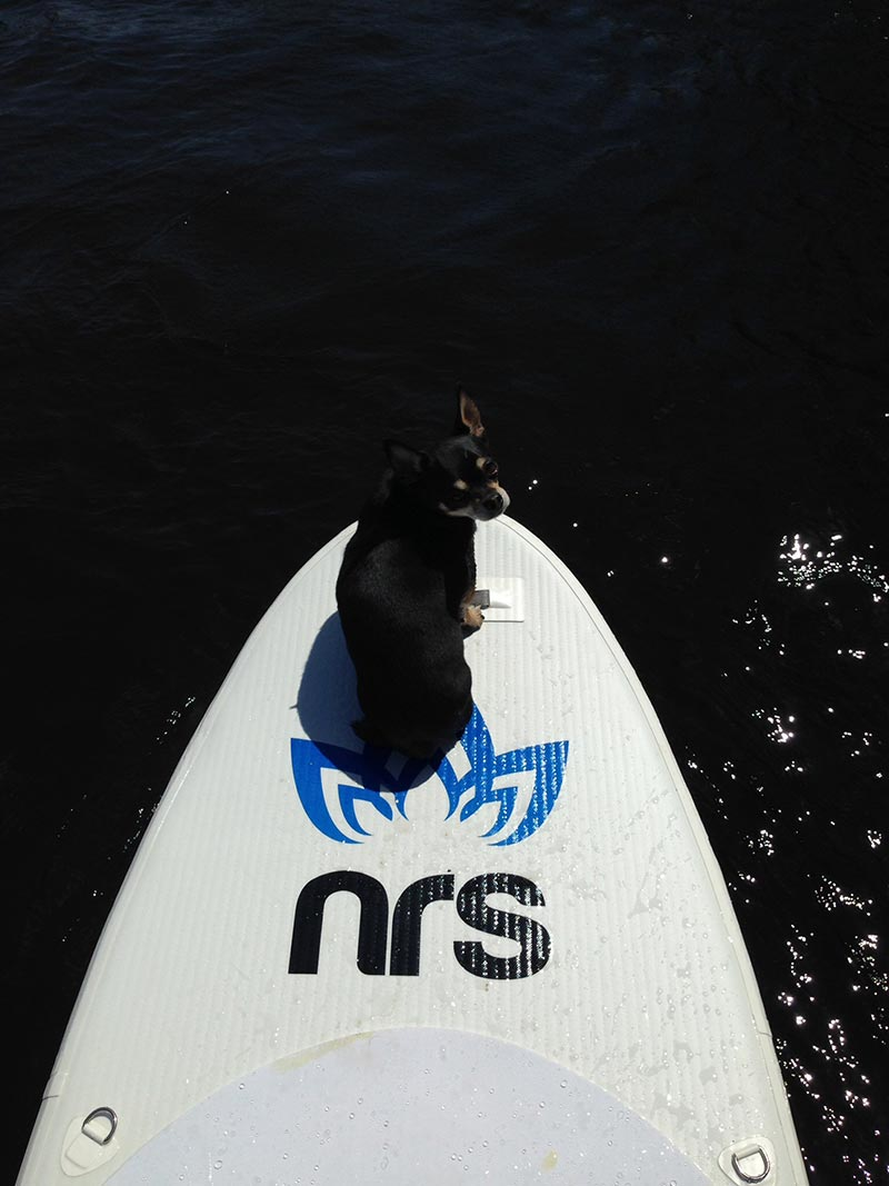 Karyne Martl: Hi my dog and i love to paddle here in Quebec city, Canada. He ´s my pal and cannot go sup without him... He like it so much he stand on it even when my board is not ready: he a real surfer