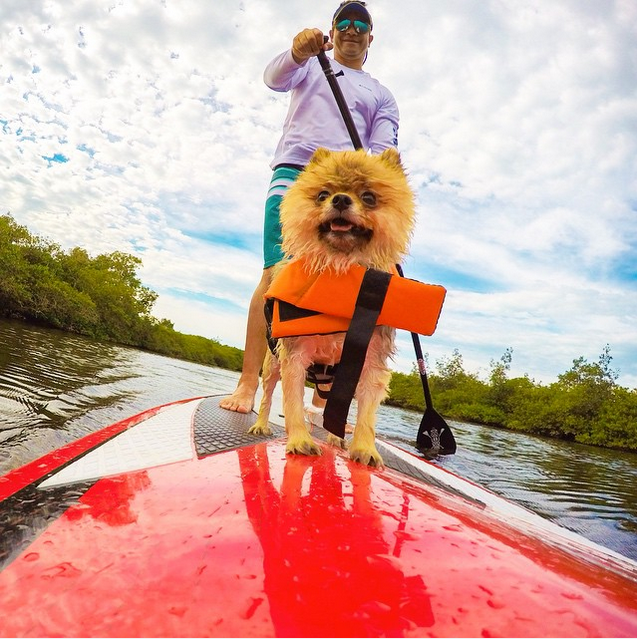@alepesca #supdoglove, standup paddle.