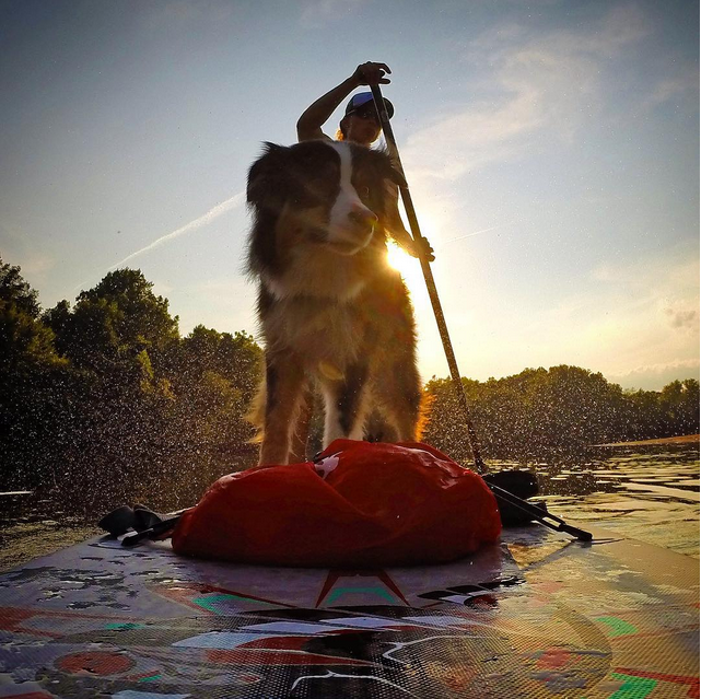 sup_with_pup Sunsets are the best!  #suppup #supwithpup