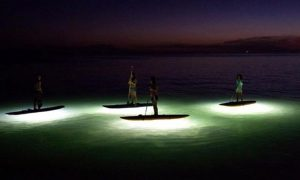 nocqua standup paddle lights