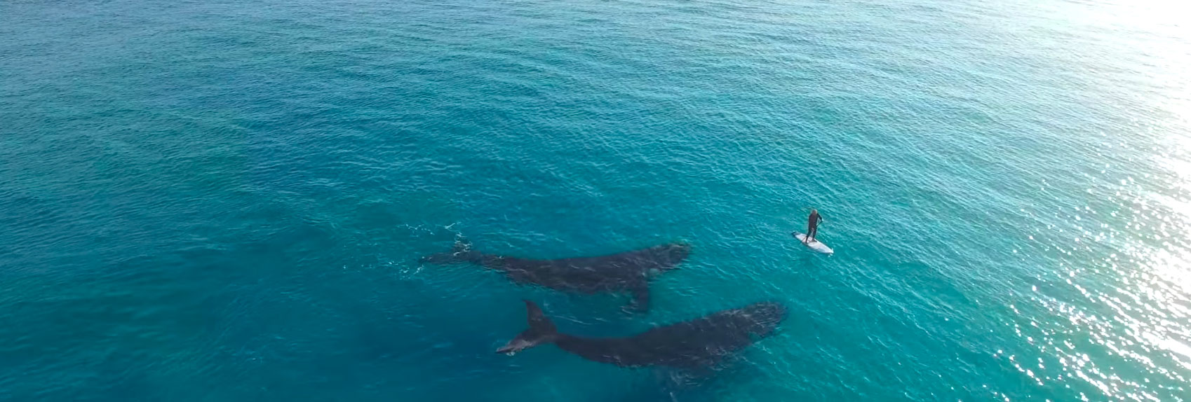 Paddleboarder's Magical Encounter With 2 Whales in Australia