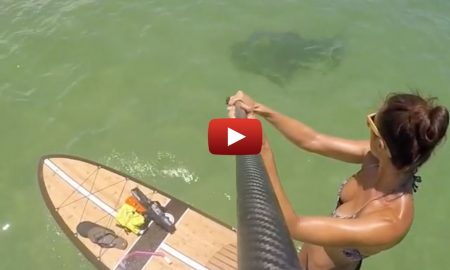 What's Lurking Beneath Her SUP at Haulover Sandbar in FL?