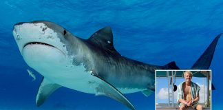 Connor Baxter fights of 10 foot tiger shark on stand up paddleboard