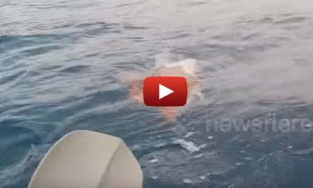 Sea Kayaker Gets a Surprise Of a Lifetime When Something Swims Towards Him