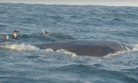 Man Saves Entangled Humpback Whale From Drowning