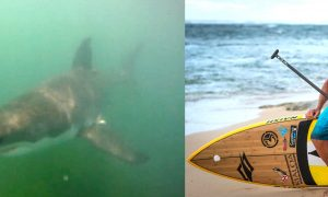 Chuck Patterson Naish shark gopro video ba