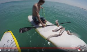 Giant Squid Wraps Its Tentacles Around James Taylor's Paddleboard!