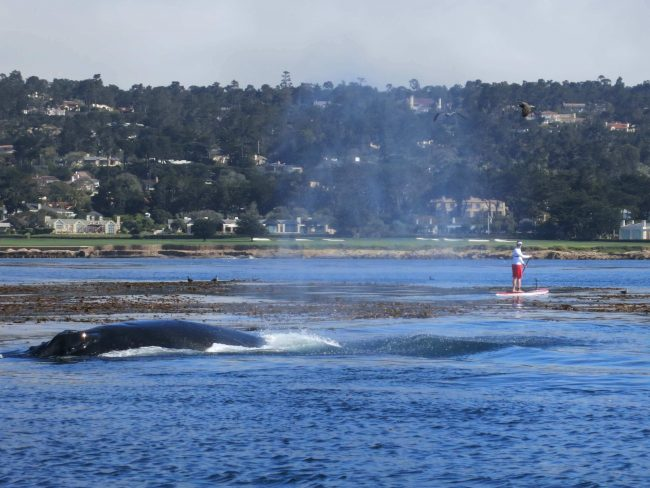 Brent Allen Outside Carmel California whale standup paddling